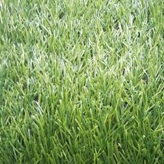 Искусственная трава Bellinturf Bellin-Stem 40 мм